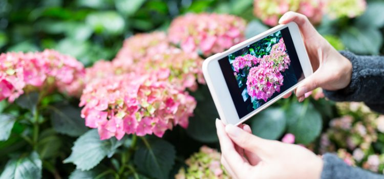 Plant Records Webinar – Image Management And The Bigger Picture